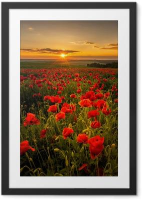 Ingelijste Poster Papaver veld bij zonsondergang