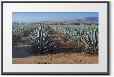 Plakat w ramie Krajobrazoweg tequila Guadalajara