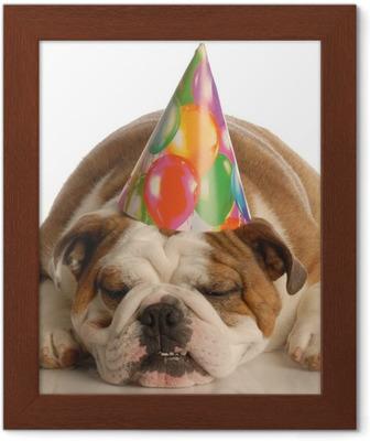 Fototapet Engelsk bulldog kledd opp rosa genser og bursdag hatt • Pixers® -  Vi lever for forandring c57081fe4c98d