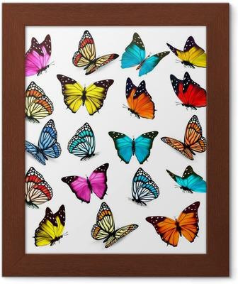 f6856ac0653 Sommerfugl samling, illustration, tegning, gravering, blæk, line art,  vektor Fototapet • Pixers® - Vi lever for forandringer