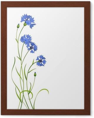 5bb4a492053 Bouquet af smukke levende blå blomster af cornflower isoleret Fotolærred •  Pixers® - Vi lever for forandringer