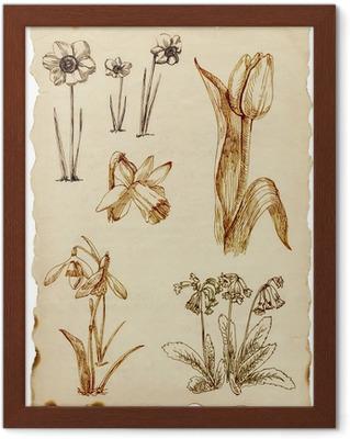 Bloemen Getekend Afbeeldingen