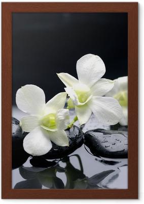 Wiersz Uroda Orchidei I Kamień Z Kropli Wody