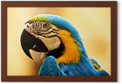 Suudella papukaijat dating