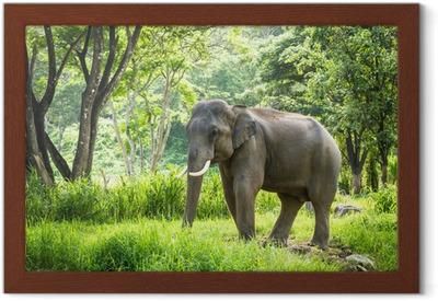 8153392156b163 Fototapeta Turysta zabawy z jazdy na słoniu • Pixers® • Żyjemy by zmieniać