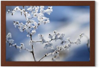 Afbeeldingen Winter Bloemen
