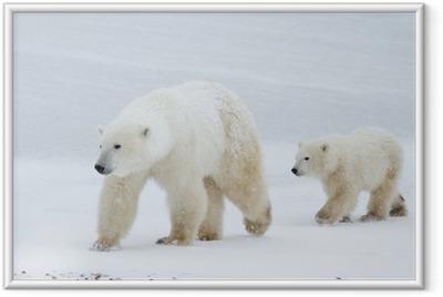Obrazek w ramie Polar Bear i mama kuba chodzenia na lodzie