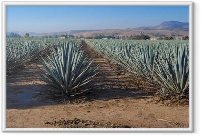 Ingelijste Afbeelding Lanscape tequila guadalajara