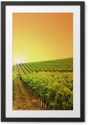 Obrazek w ramie Winnica na wzgórzu