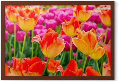 Afbeeldingen Bloemen Tulpen