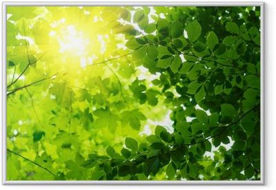 Lámina Enmarcada Hojas verdes con los rayos solares.