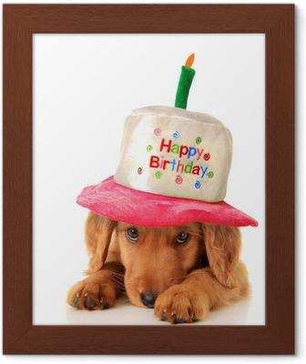 Carta Da Parati Cucciolo Di Buon Compleanno Pixers Viviamo Per
