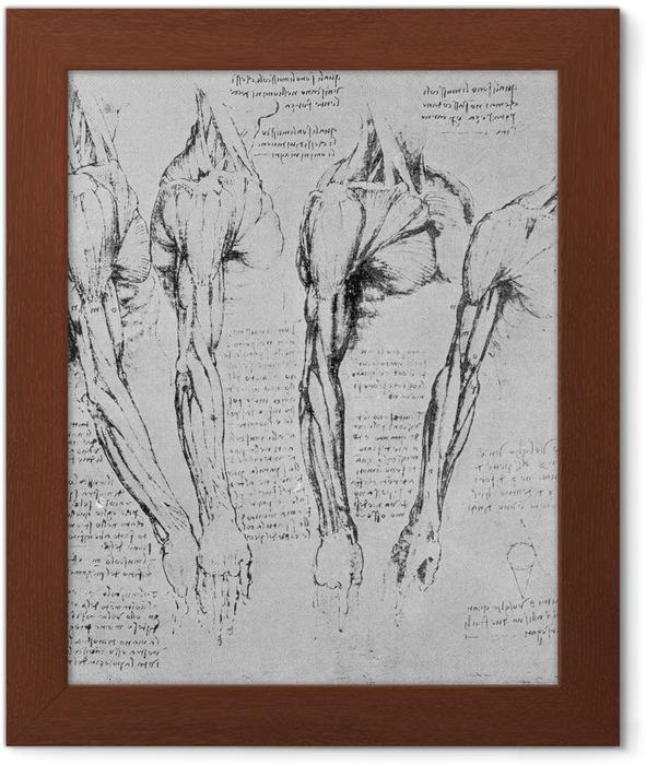 Poster en cadre Léonard de Vinci - Étude des bras - Reproductions