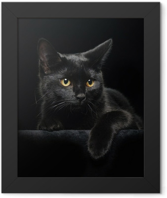 Black cat with yellow eyes Framed Poster