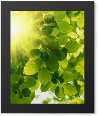 Green leaves with sun ray. Framed Poster