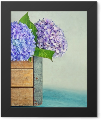 Blue hydrangea flowers in a wooden box Framed Poster