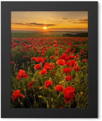 Poppy field at sunset Framed Poster