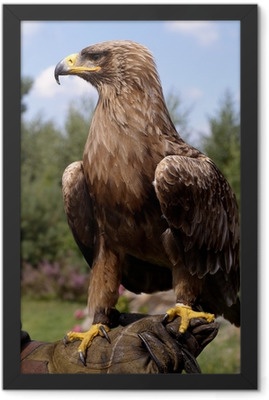 profile portrait of beautiful golden eagle Framed Poster