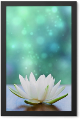 white water lilly flower Framed Poster