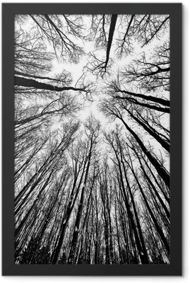 black and white trees silhouettes Framed Poster
