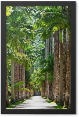 Botanical garden. Rio de Janeiro Framed Poster