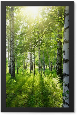 summer birch woods with sun Framed Poster
