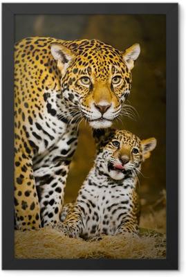 Jaguar Cubs Framed Poster