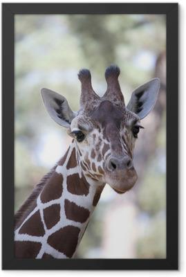 Giraffe Framed Poster