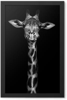 Giraffe in Black and White Framed Poster