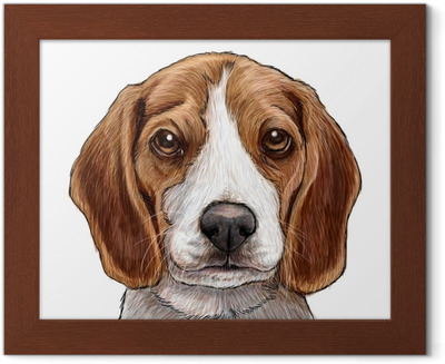 Beagle Yavru Kopek Kafasi El Cizmek Ve Beyaz Arka Plan Uzerinde