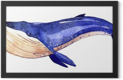 watercolor whale, hand painted illustration isolated on white background Framed Poster