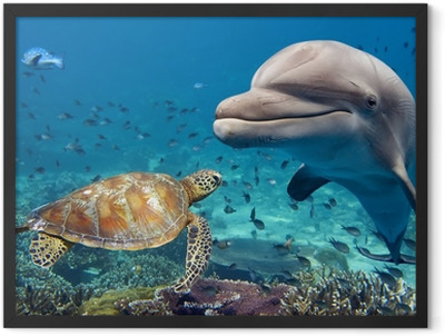 dolphin and turtle underwater on reef Framed Poster