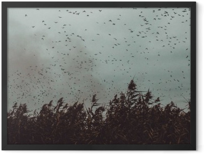 bunch of Birds flying close to cane in a dark sky- vintage style black and white Framed Poster