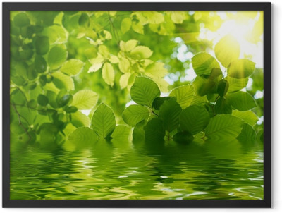 Green leaves with sun ray Framed Poster