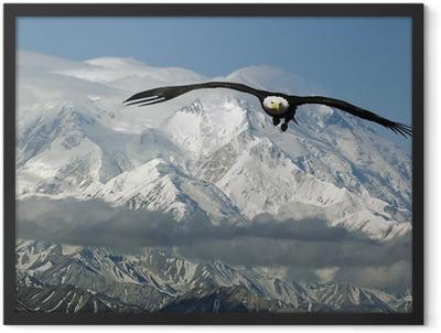 bald eagle in mountains Framed Poster