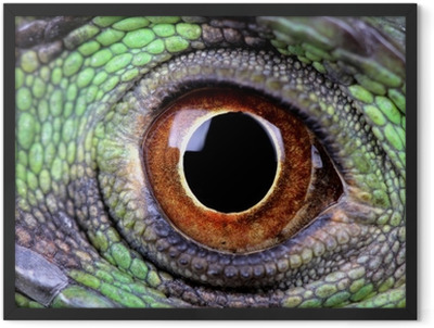 water dragon eye Framed Poster