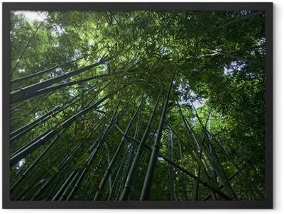 Bamboo Forest on Maui Framed Poster