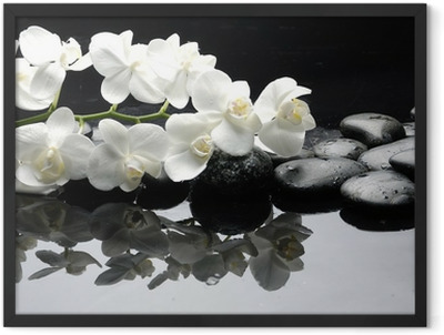 Close up white orchid with stone water drops Framed Poster