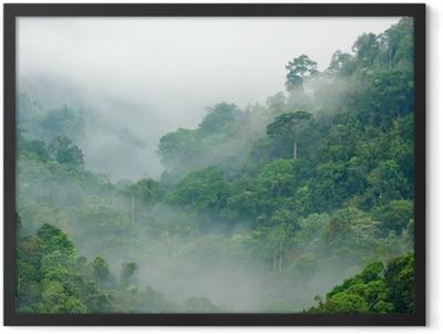 Morning fog in the rainforest Framed Poster
