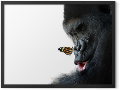 gorilla and butterfly animal friendship Framed Poster