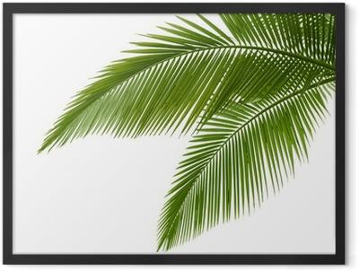 Palm leaves Framed Poster