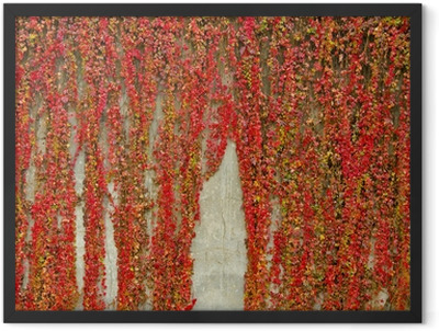 Colorful creepers covers wall made of concrete. Autumn colors. Framed Poster