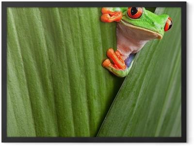 red eyed tree frog Framed Poster