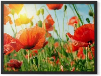 poppies field in rays sun Framed Poster