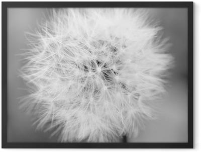 Dandelion Mono Framed Poster