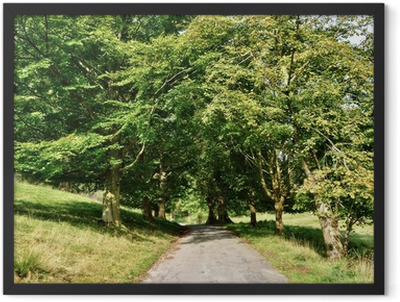 Narrow lane through an avenue of Lime trees. Framed Poster