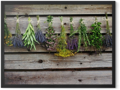 Herbs drying on the wooden barn in the garden Framed Poster