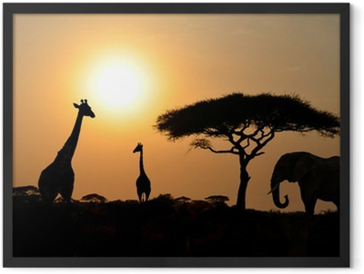 Giraffes and Elephant with Acacia tree with Sunset Framed Poster