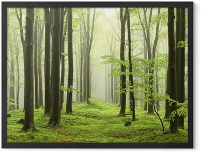 Spring beech forest in the mountains Framed Poster