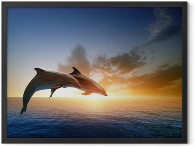 Dolphins jumping Framed Poster